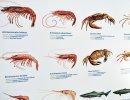 Tesouros Profundos do Oceano Atlântico